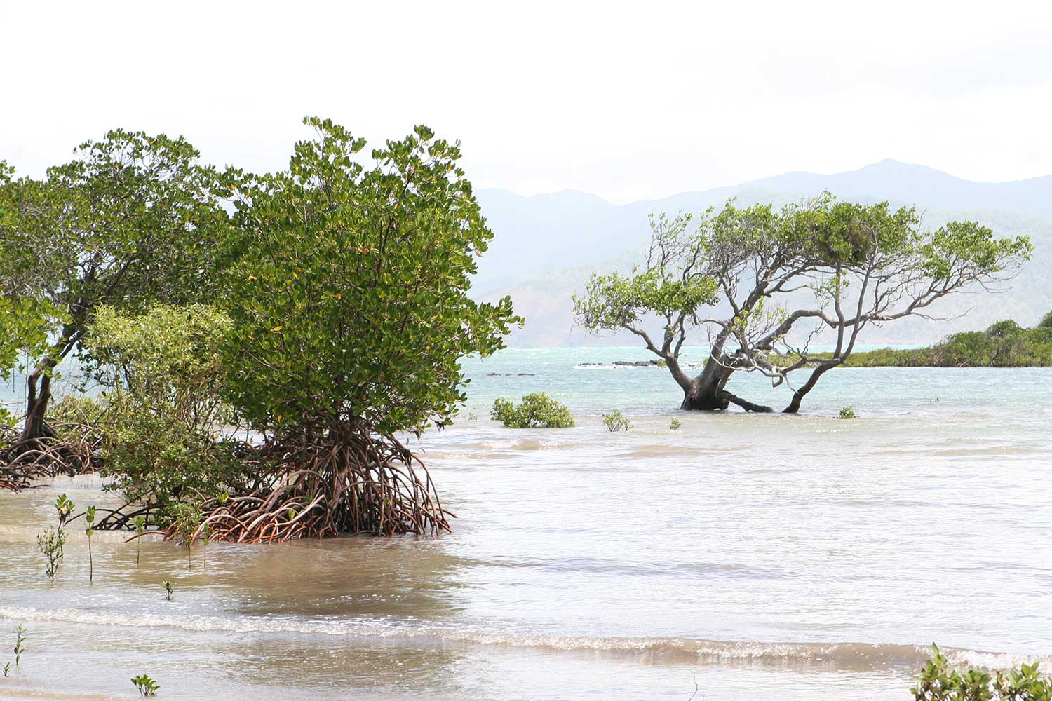 Strengthening Climate Change </br>Information Management <br/>in the Pacific