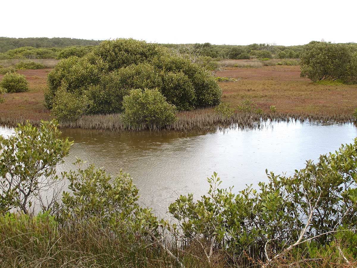 Blue Carbon – a Business Case </br>for the repair of Australia's  coastal wetlands