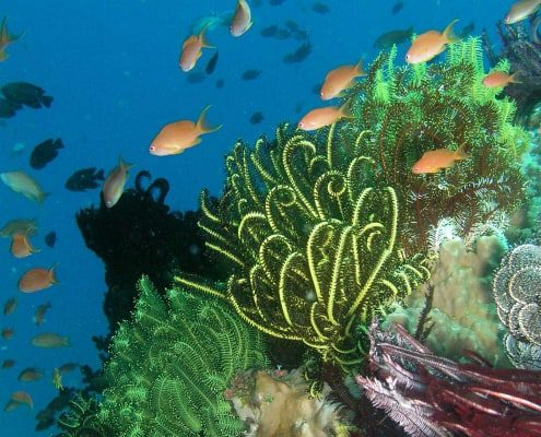 Conservation in the Coral Triangle