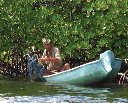 fisherman in mangrove